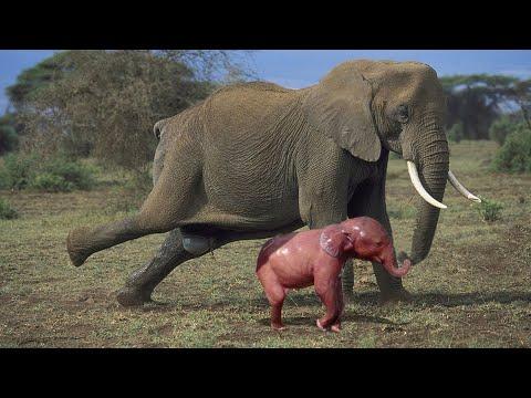 Как Выглядят Детеныши Разных Животных!