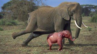 Обезьяна Рожает! Как Выглядят Детеныши Разных Животных!