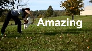 Epic and Amazing Dog Tricks Percy the Papillon Dog