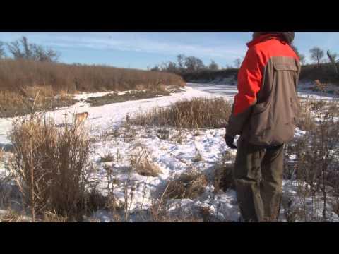 South Dakota Pheasant Hunting 2014