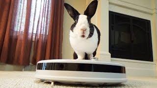 Rabbit reviews robot vacuum!