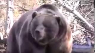 ヒグマが人を襲う瞬間をとらえた動画になります。 鎖でつながれていると...