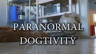 Paranormal Dogtivity (my house is definitely haunted!)