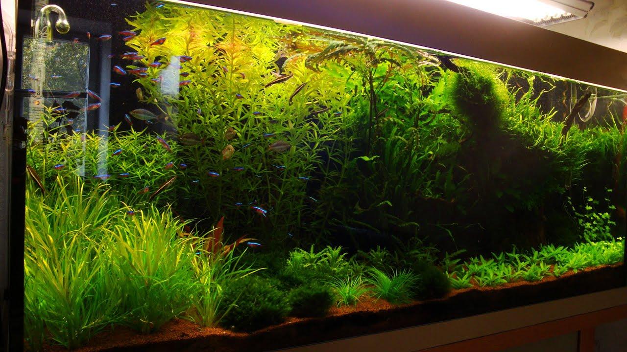 Воздушный аквариум своими руками фото 475