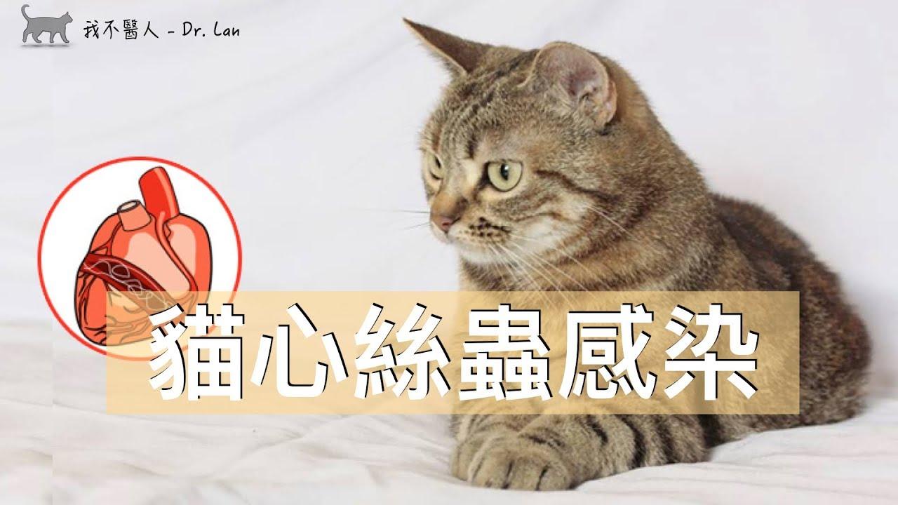 貓心絲蟲感染癥 - YouTube