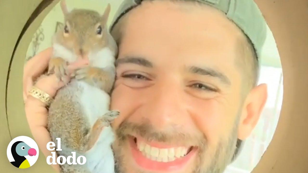 Download Ardilla sigue regresando a su rescatista luego de ser soltada | El Dodo