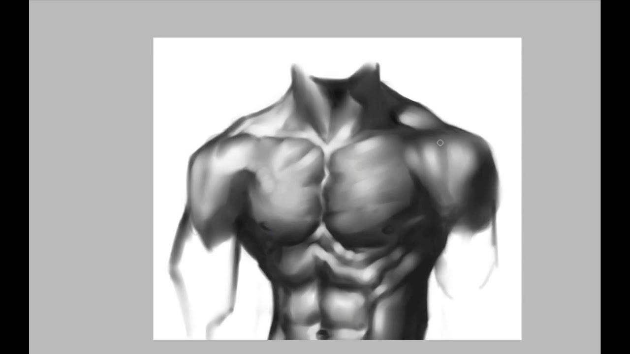 Tutorial de Anatomía \