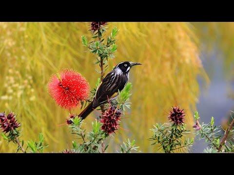 Wildlife  Photography  The ART of finding Birds nesting
