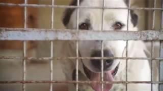 Шереметьевский приют для породистых собак