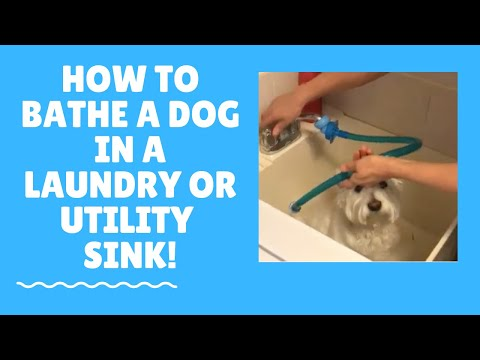 Quick and easy way to bathe your dog in the utility sink with a Rinseroo. Get yours at Rinseroo.com
