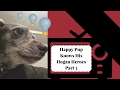 Happy Pup Knows Retro: TV Hogans Heroes Part 3
