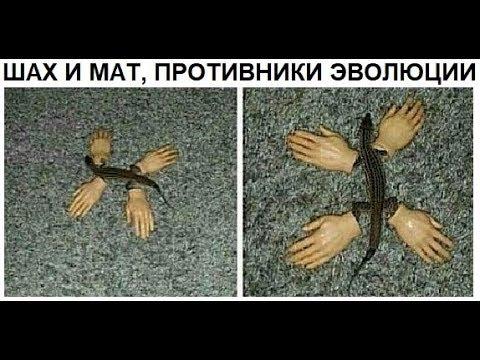Лютые приколы. Доказательство ЭВОЛЮЦИИ !!!