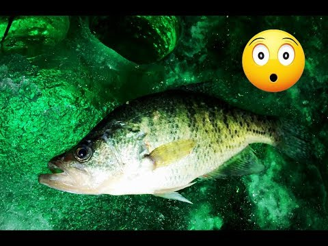 GIANT Crappie At Night Ice Fishing With A GLOW LIGHT!