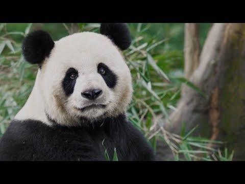 This is China: Pandaland