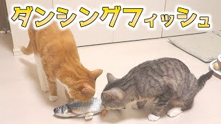 cute cats being curious about the toy fish