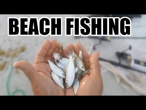 Best Free Bait For Beach Fishing, Catching, Redfish, Trout, Spanish Mackerel In The Florida Surf