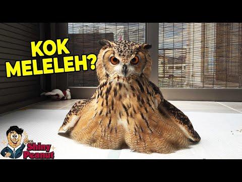 Banyak yang Belum Tau, Fakta Burung yang Bikin Shock!