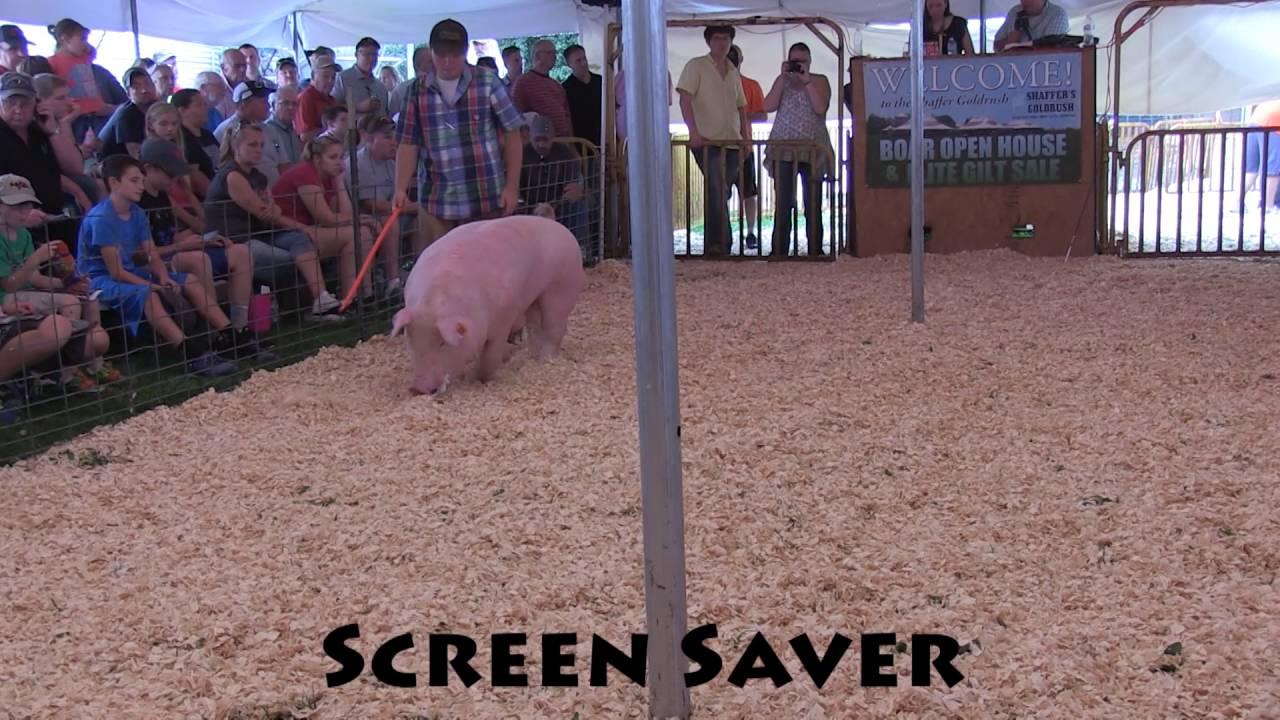 2016 screen saver youtube