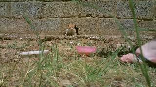 Abandoned kitten exploringwmv