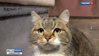 Непородистые кошки стали самыми популярными домашними питомцами в России