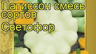 Патиссон смесь сортов Светофор. Краткий обзор, описание характеристик, где купить семена Svetofor