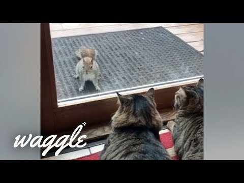 Absolutely Ferocious Pets | Funny Pet Video Compilation