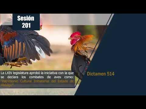 Hidalgo aprueba pelea de gallos