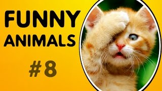 Funny animals 2017 funniest videos   funny animal compilation #8