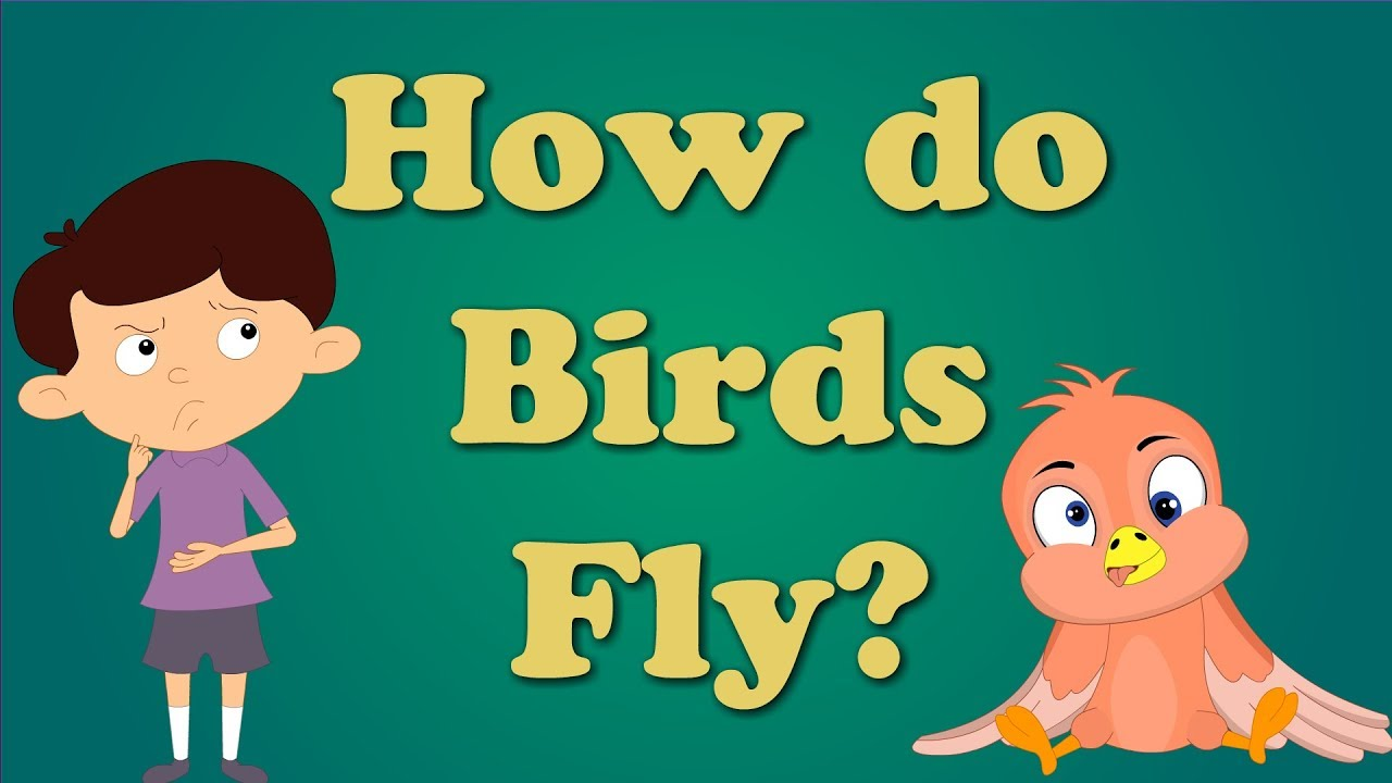 How do Birds Fly for Children   #aumsum #kids #education #