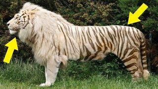 7 Animales Híbridos Totalmente Reales