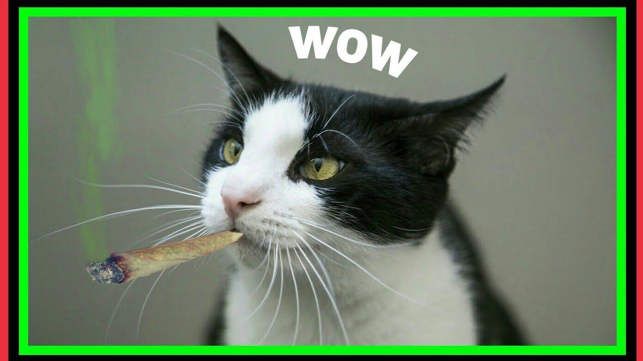 lustige katzen zum totlachen funny cat fails  youtube