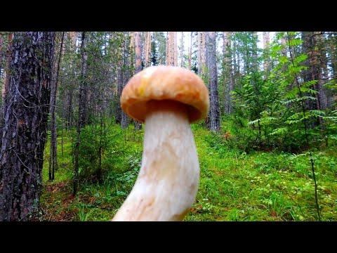 Вопрос: Недавно в саду обнаружил такие грибы. Подскажете что за грибы на фото?
