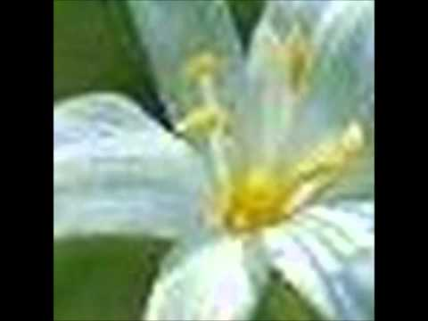 Vidéo image avec musique wlmp2 mp5
