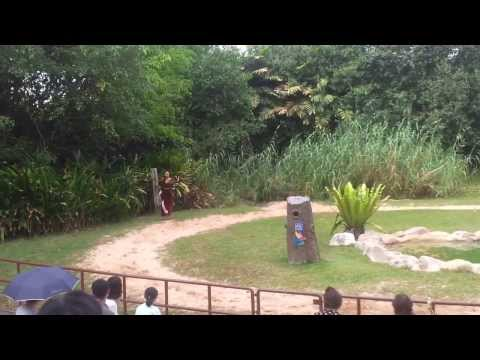 Kings of the Skies Show - Jurong Bird Park - Intro