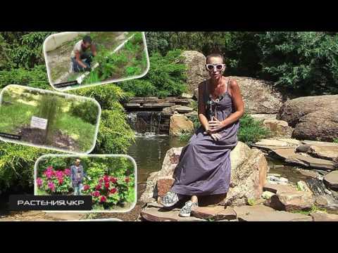 Услуги ландшафтного дизайнера и садовника / Эксклюзивный дизайн сада в Харькове