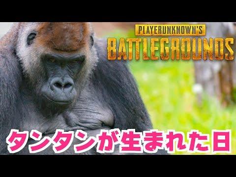 【PUBG】タンタンが生まれた日!!チ○チ○じゃないよ!!!【TUTTI】