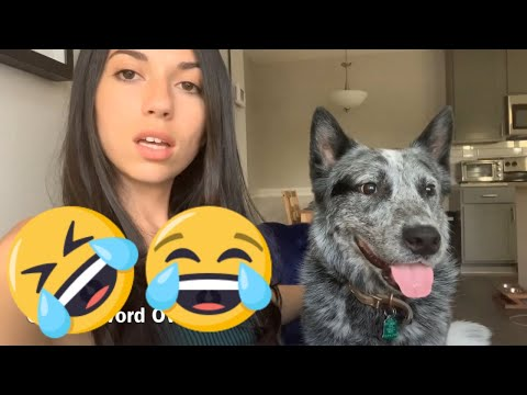 Things My Blue Heeler Hates | Doggo Lifestyle Video | Funny Australian Cattle Dog Video