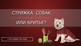 ✄  Стрижка собак или бритье? ✁