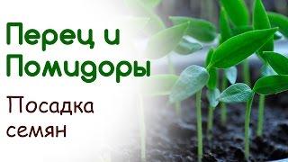 Посев томата и перца. Посадка семян(, 2015-02-28T18:17:06.000Z)