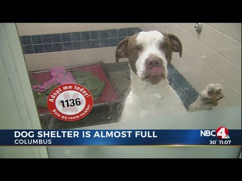 Franklin County Dog Shelter nearly full, seeking adoptions