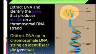 Recombinant DNA technology Manufacturing of insulin