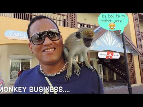 Monkey Business : St  Kitts For The Day