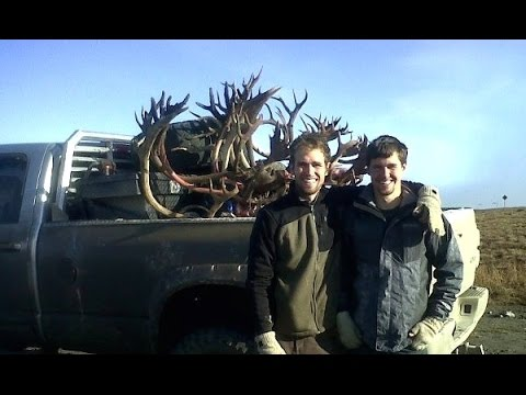 Hunting Caribou - 3 Giant Bulls Down - Limitless 15