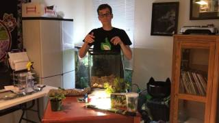 How to setup a Red Eye Tree Frog BioActive Vivarium. Self-cleaning, self-maintaining
