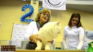 Юбилейная выставка кошек и котов в Харькове, 5 декабря, 2015 года, Радмир Экспохол, WCF, часть 8