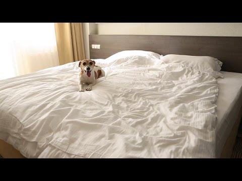 Bedtime Allergy Tips