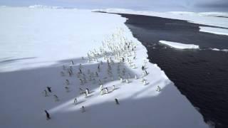 Косатка напугала пингвинов Адели