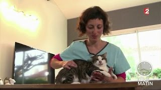 Faune - L'ostéopathie, c'est aussi pour les chats !