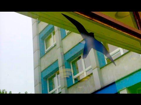 #187 Рисунки птиц на окнах и заборах. Зачем?