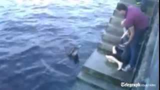Download 'Dusty' the dolphin attacks woman Mp3 and Videos